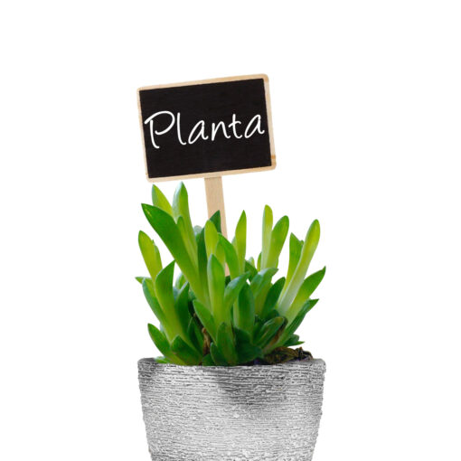 etiqueta plantas